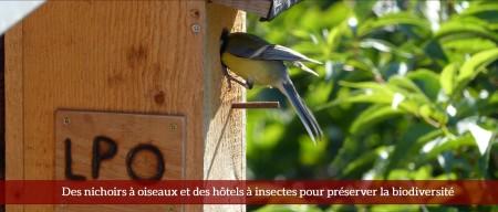 Des nichoirs à oiseaux
